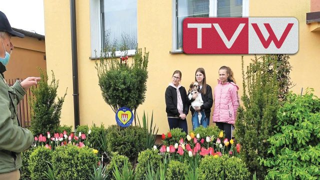 700 tulipanow na rocznicę 700 lat Warki Jerzego Kołodziejskiego – 7 maja 2021